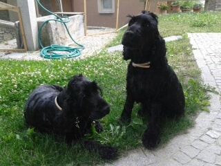 Max and Peluche are very friendly dogs who frequent the chalet